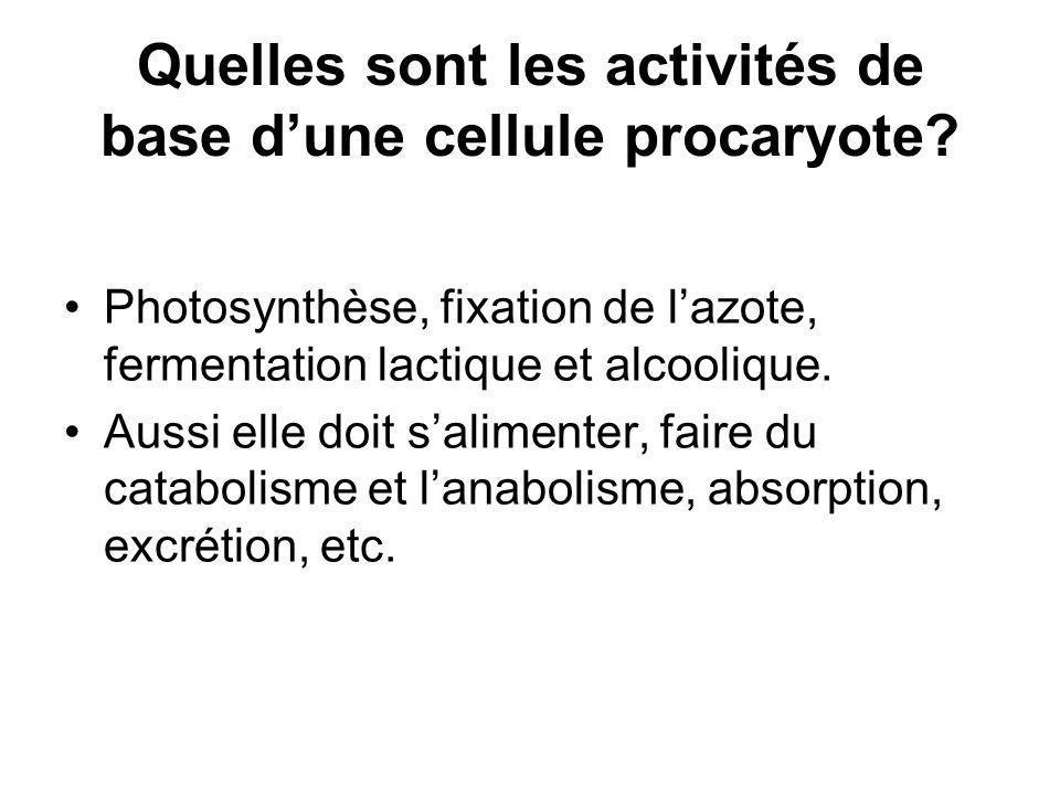 Quelles sont les activités de base dune cellule procaryote? Photosynthèse, fixation de lazote, fermentation lactique et alcoolique. Aussi elle doit sa