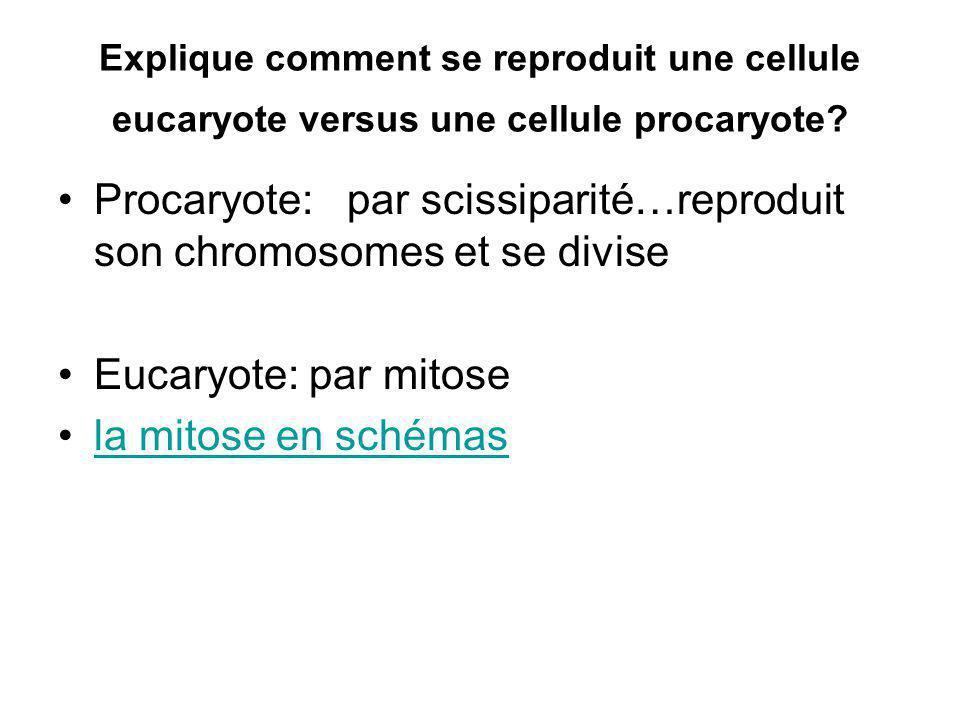 Explique comment se reproduit une cellule eucaryote versus une cellule procaryote? Procaryote: par scissiparité…reproduit son chromosomes et se divise