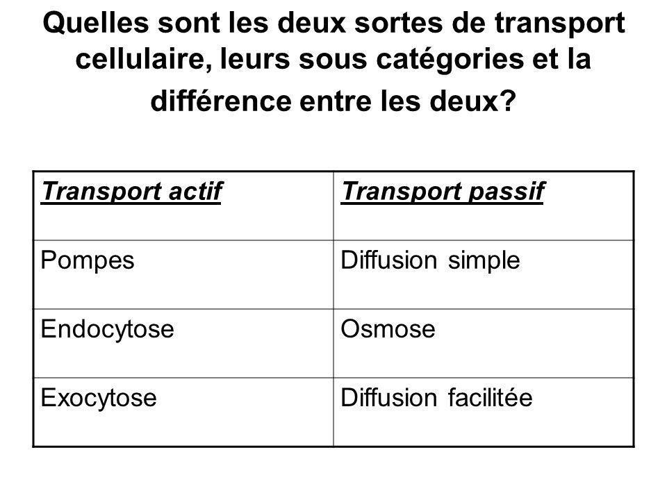 Quelles sont les deux sortes de transport cellulaire, leurs sous catégories et la différence entre les deux? Transport actifTransport passif PompesDif