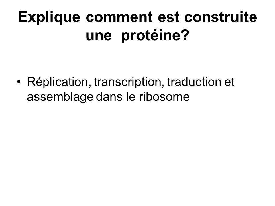Explique comment est construite une protéine? Réplication, transcription, traduction et assemblage dans le ribosome
