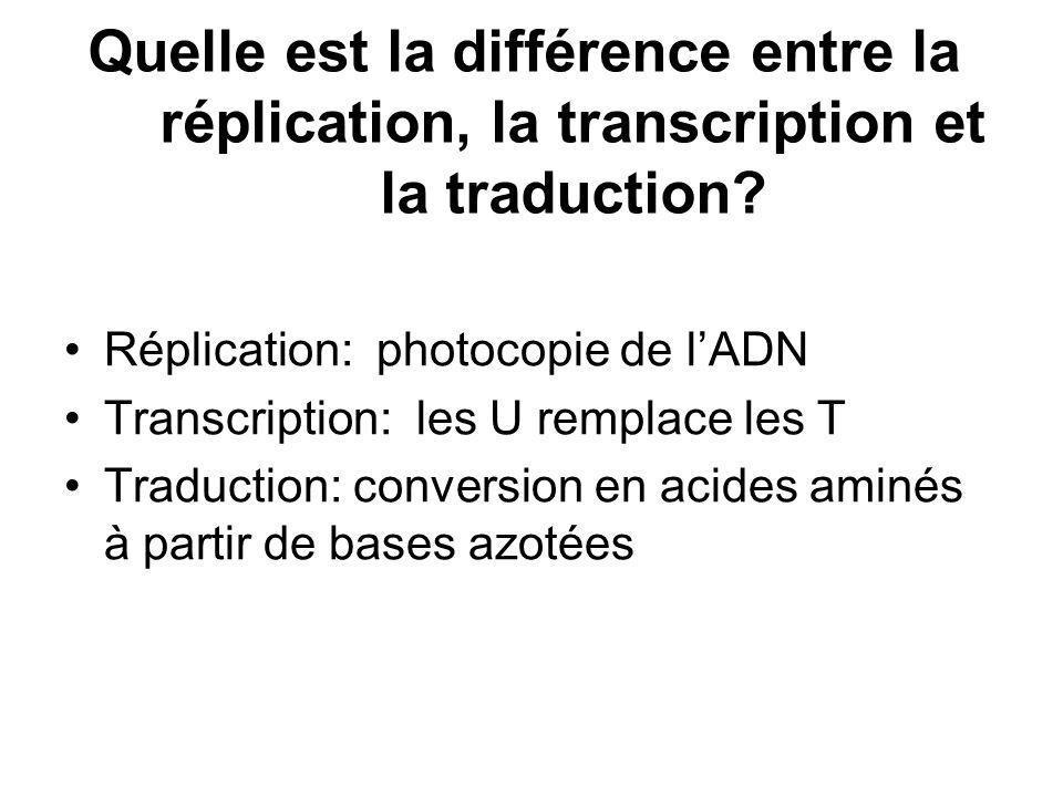 Quelle est la différence entre la réplication, la transcription et la traduction? Réplication: photocopie de lADN Transcription: les U remplace les T