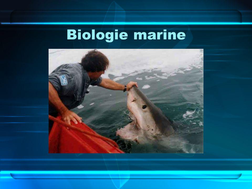 Biologie marine