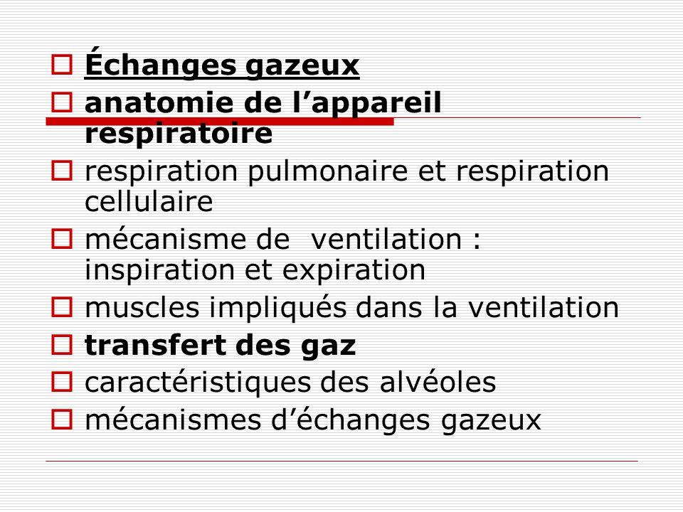Échanges gazeux anatomie de lappareil respiratoire respiration pulmonaire et respiration cellulaire mécanisme de ventilation : inspiration et expirati