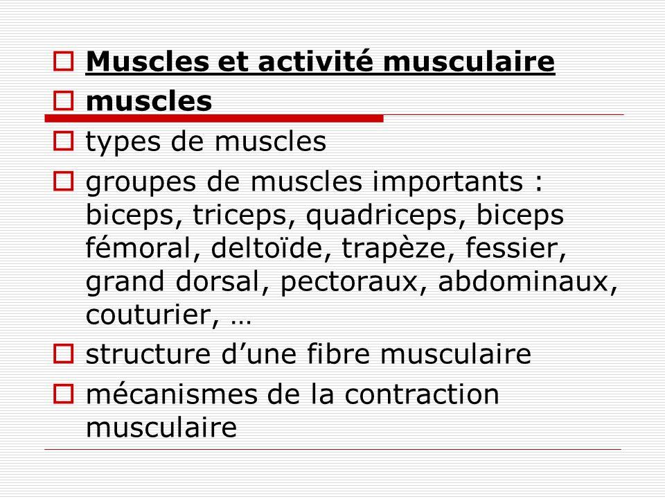 Muscles et activité musculaire muscles types de muscles groupes de muscles importants : biceps, triceps, quadriceps, biceps fémoral, deltoïde, trapèze