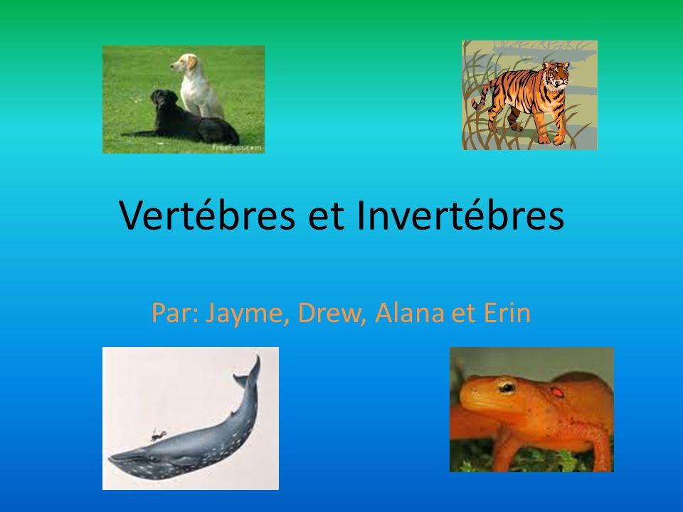 Vertébres et Invertébres Par: Jayme, Drew, Alana et Erin