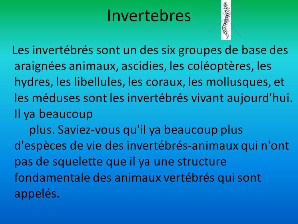 Invertebres Les invertébrés sont un des six groupes de base des araignées animaux, ascidies, les coléoptères, les hydres, les libellules, les coraux,