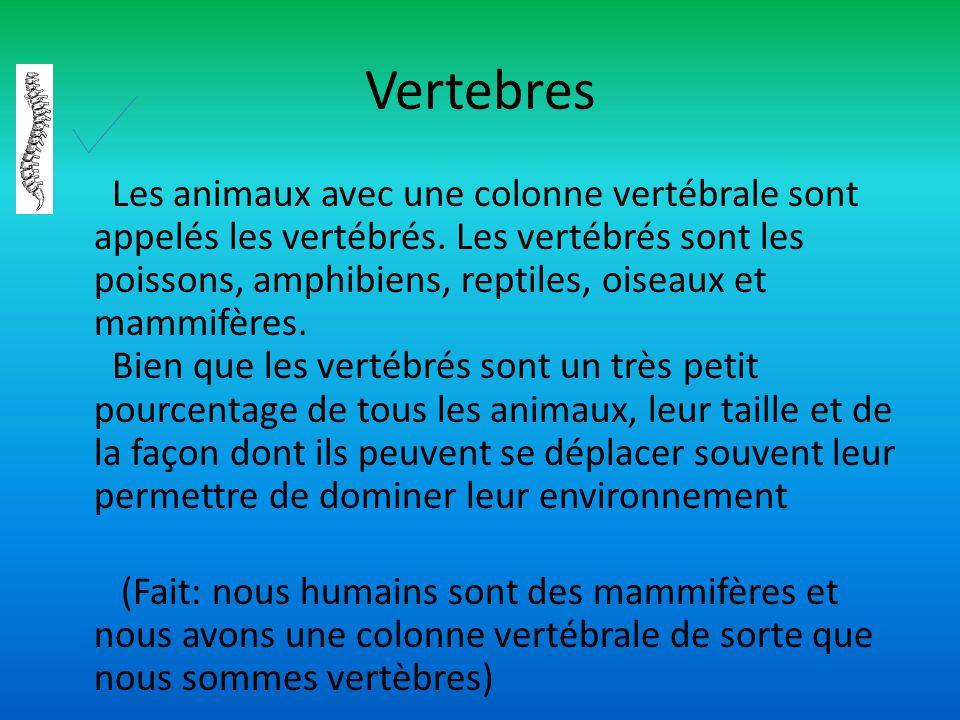 Vertebres Les animaux avec une colonne vertébrale sont appelés les vertébrés. Les vertébrés sont les poissons, amphibiens, reptiles, oiseaux et mammif