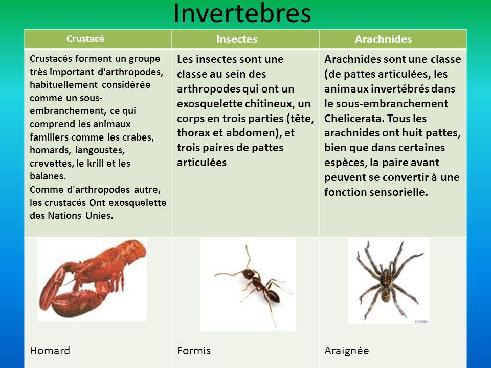 Crustacé Insectes Arachnides Crustacés forment un groupe très important d'arthropodes, habituellement considérée comme un sous- embranchement, ce qui
