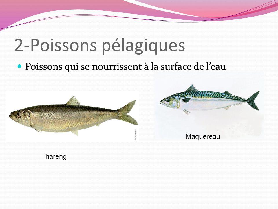2-Poissons pélagiques Poissons qui se nourrissent à la surface de leau hareng Maquereau