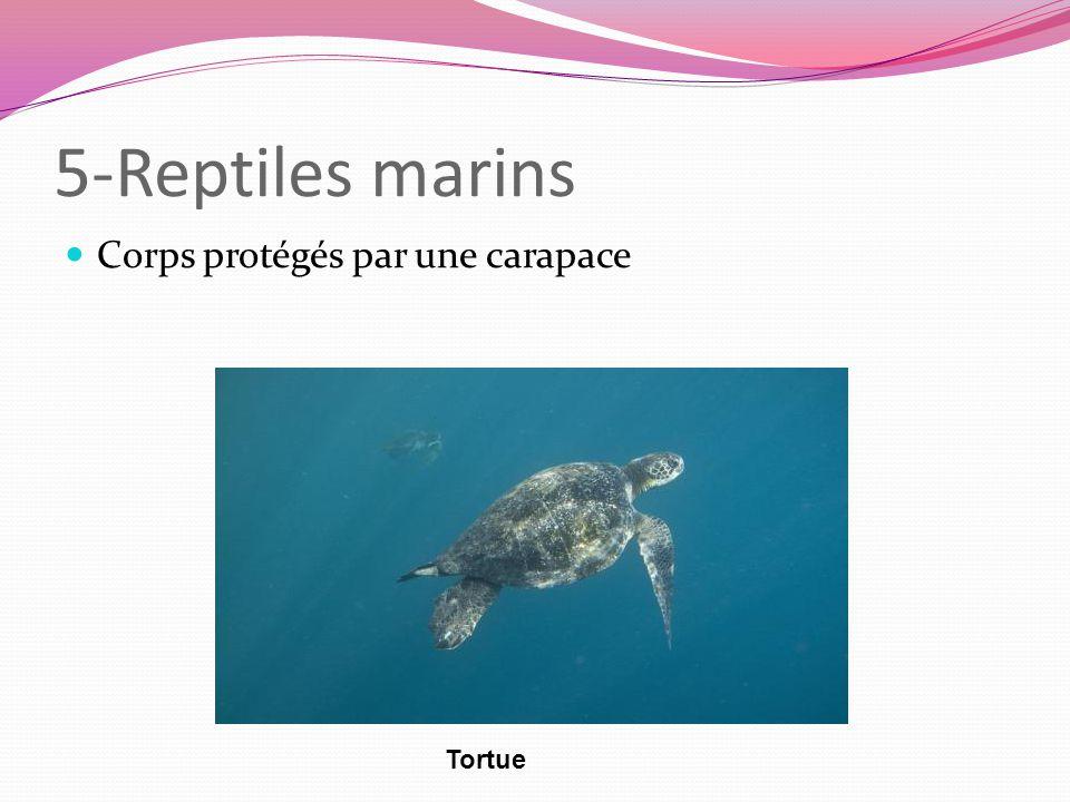 5-Reptiles marins Corps protégés par une carapace Tortue