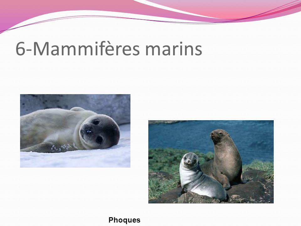 6-Mammifères marins Phoques