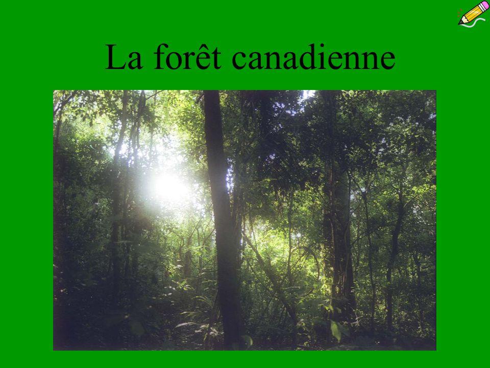 La forêt canadienne (en lan 2000)… Le Canada compte 10% des forêts du monde.