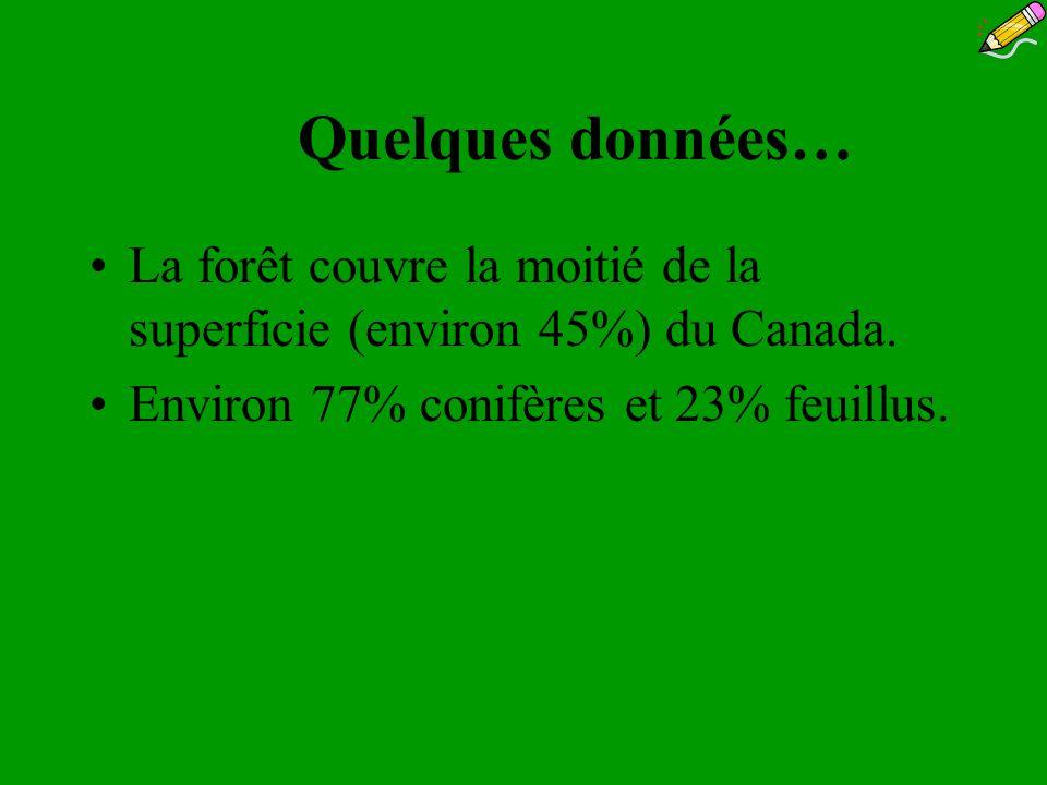 Quelques données… La forêt couvre la moitié de la superficie (environ 45%) du Canada. Environ 77% conifères et 23% feuillus.