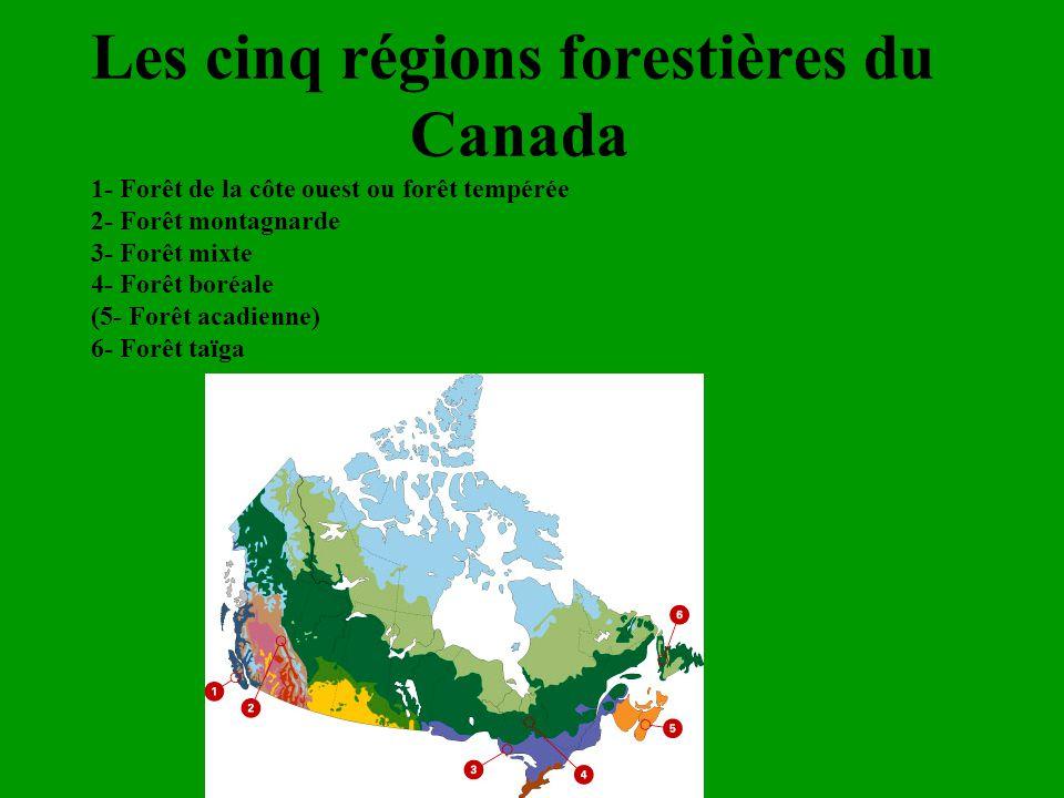 Les cinq régions forestières du Canada 1- Forêt de la côte ouest ou forêt tempérée 2- Forêt montagnarde 3- Forêt mixte 4- Forêt boréale (5- Forêt acad