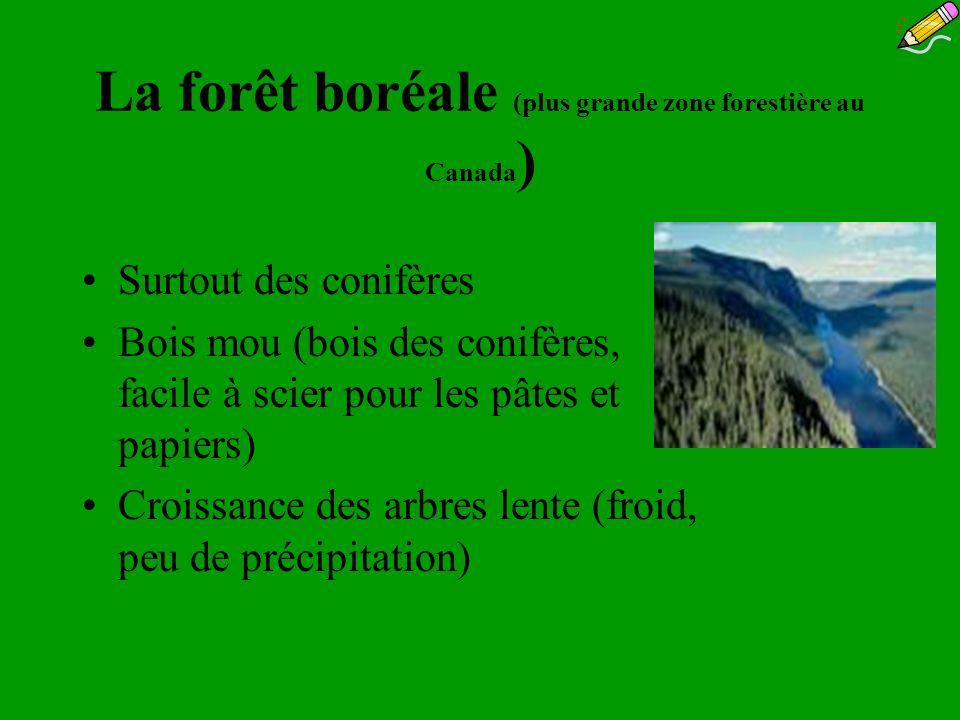 La forêt boréale (plus grande zone forestière au Canada ) Surtout des conifères Bois mou (bois des conifères, facile à scier pour les pâtes et papiers