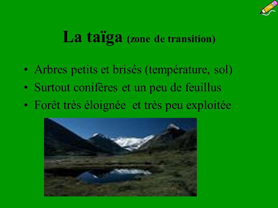 La taïga (zone de transition) Arbres petits et brisés (température, sol) Surtout conifères et un peu de feuillus Forêt très éloignée et très peu explo
