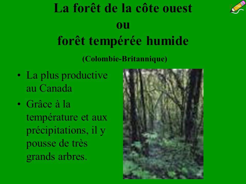 La forêt de la côte ouest ou forêt tempérée humide (Colombie-Britannique) La plus productive au Canada Grâce à la température et aux précipitations, i