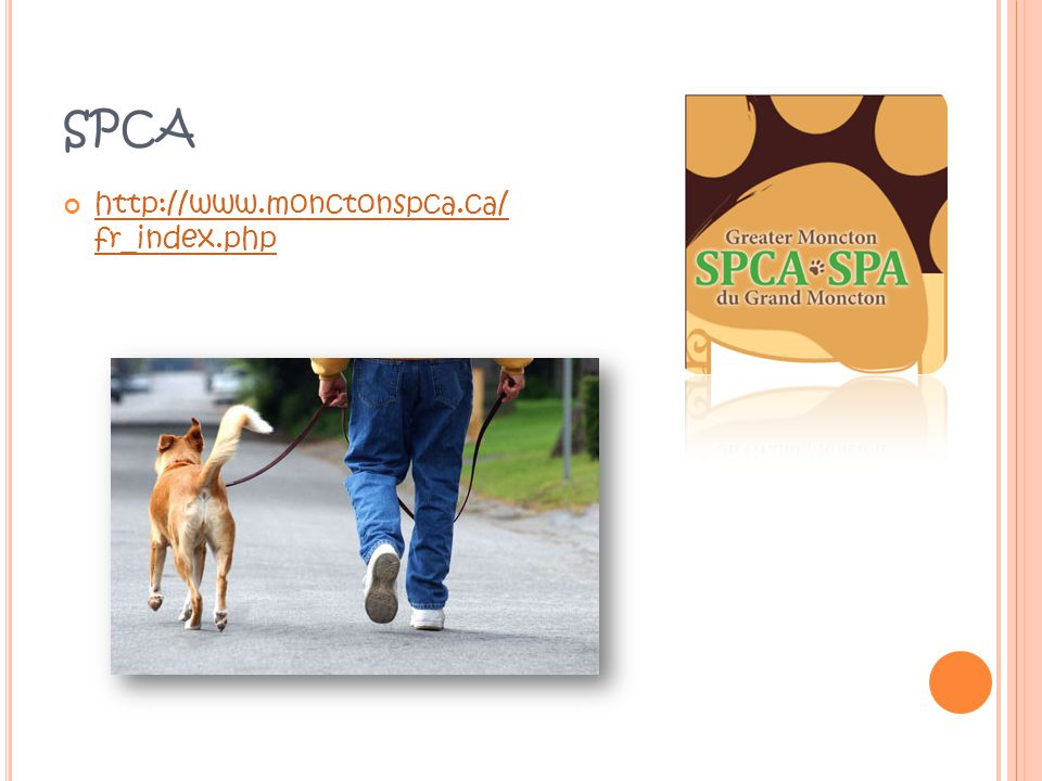 SPCA http://www.monctonspca.ca/ fr_index.php http://www.monctonspca.ca/ fr_index.php