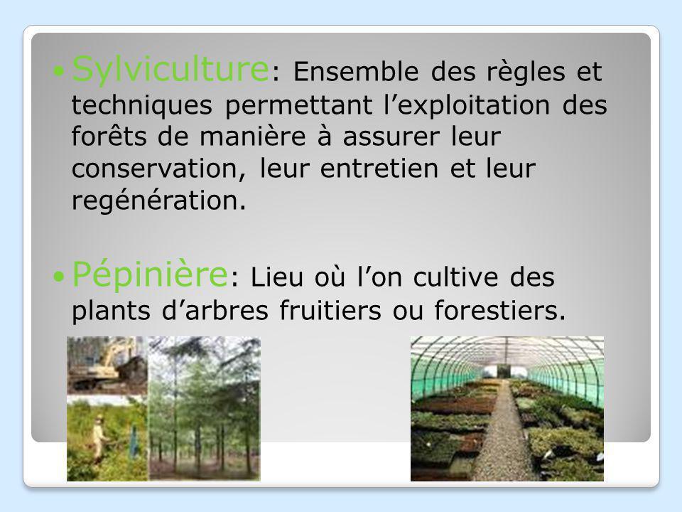 Sylviculture : Ensemble des règles et techniques permettant lexploitation des forêts de manière à assurer leur conservation, leur entretien et leur regénération.