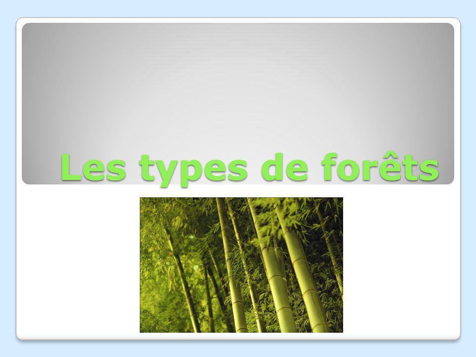 Les types de forêts