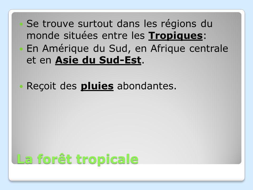 La forêt tropicale Se trouve surtout dans les régions du monde situées entre les Tropiques: En Amérique du Sud, en Afrique centrale et en Asie du Sud-Est.