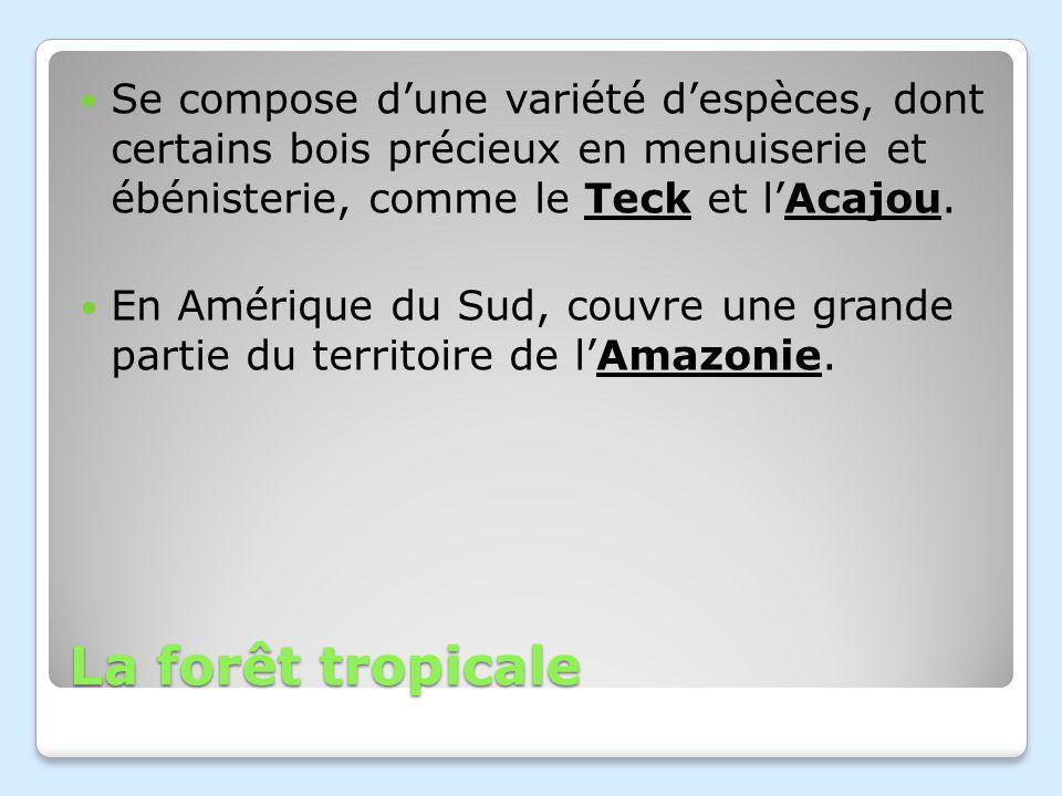 La forêt tropicale Se compose dune variété despèces, dont certains bois précieux en menuiserie et ébénisterie, comme le Teck et lAcajou.