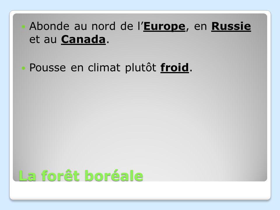 La forêt boréale Abonde au nord de lEurope, en Russie et au Canada. Pousse en climat plutôt froid.