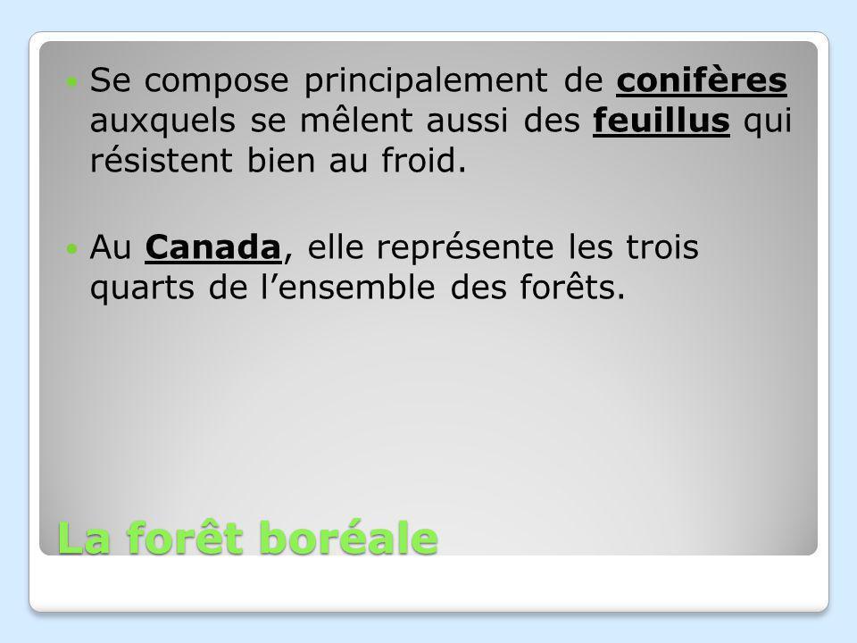La forêt boréale Se compose principalement de conifères auxquels se mêlent aussi des feuillus qui résistent bien au froid.