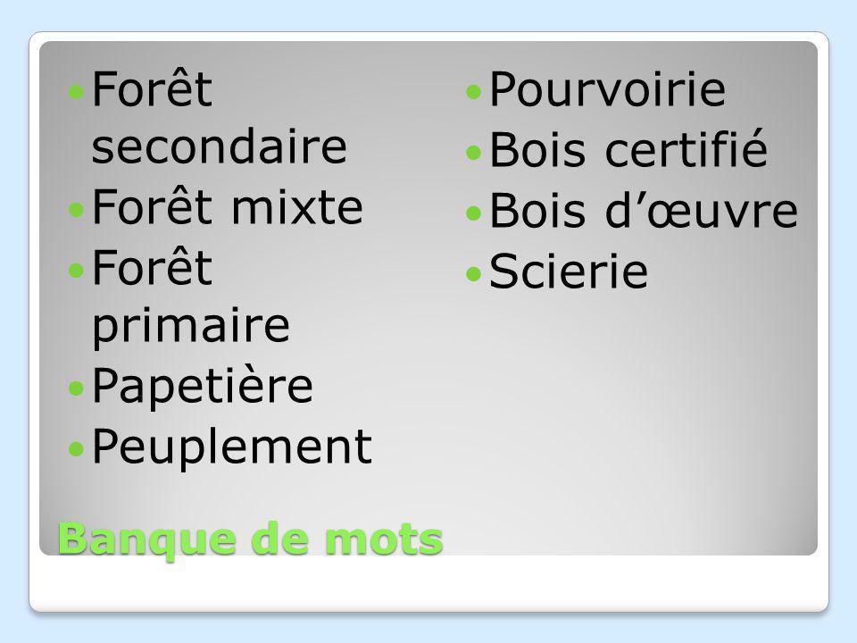 Banque de mots Forêt secondaire Forêt mixte Forêt primaire Papetière Peuplement Pourvoirie Bois certifié Bois dœuvre Scierie