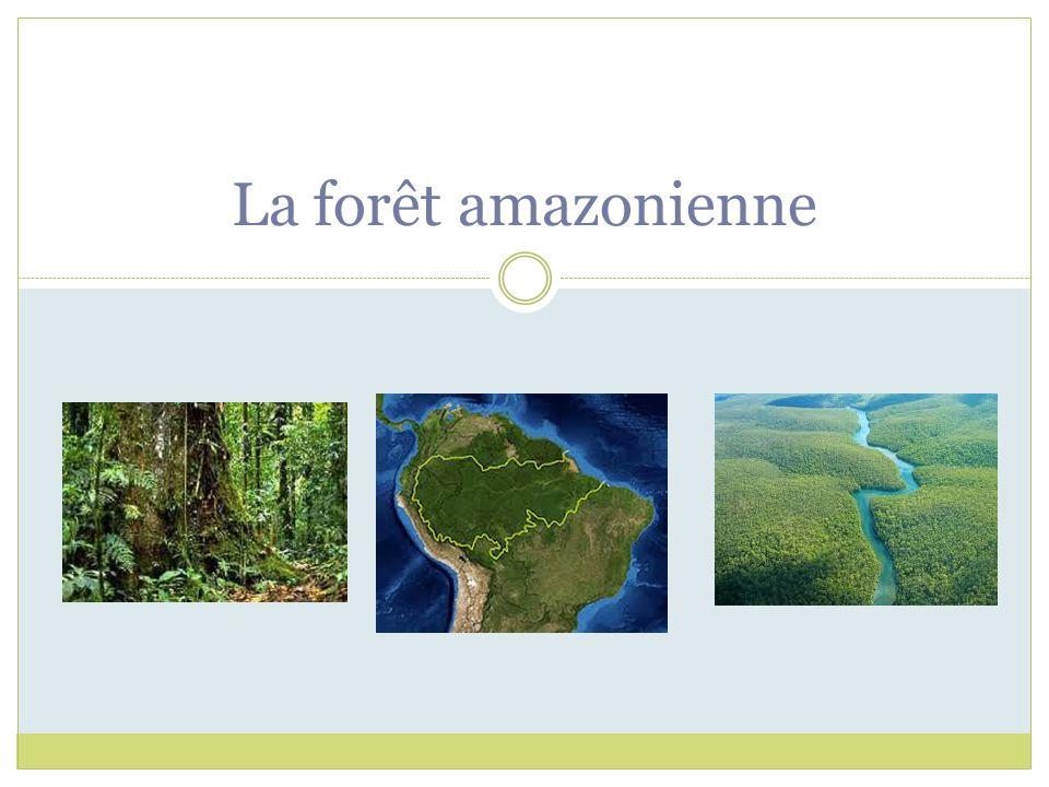 1- Quel genre de forêt se retrouve sur ce territoire de la forêt amazonienne.