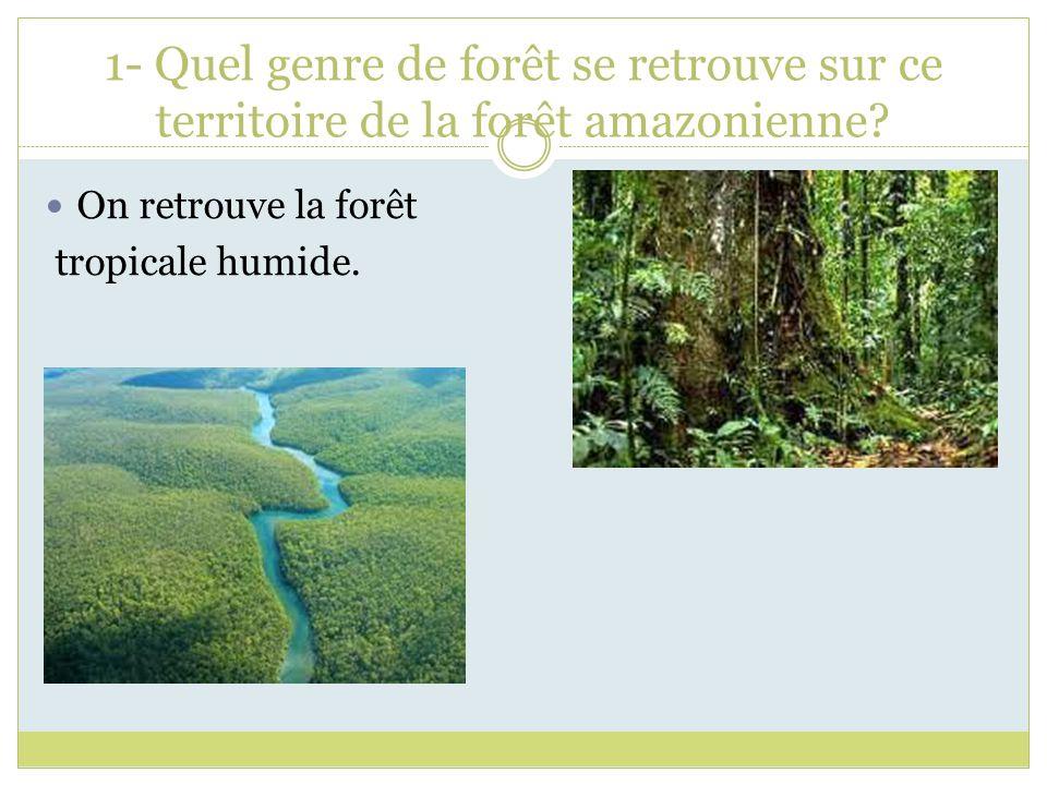 1- Quel genre de forêt se retrouve sur ce territoire de la forêt amazonienne? On retrouve la forêt tropicale humide.