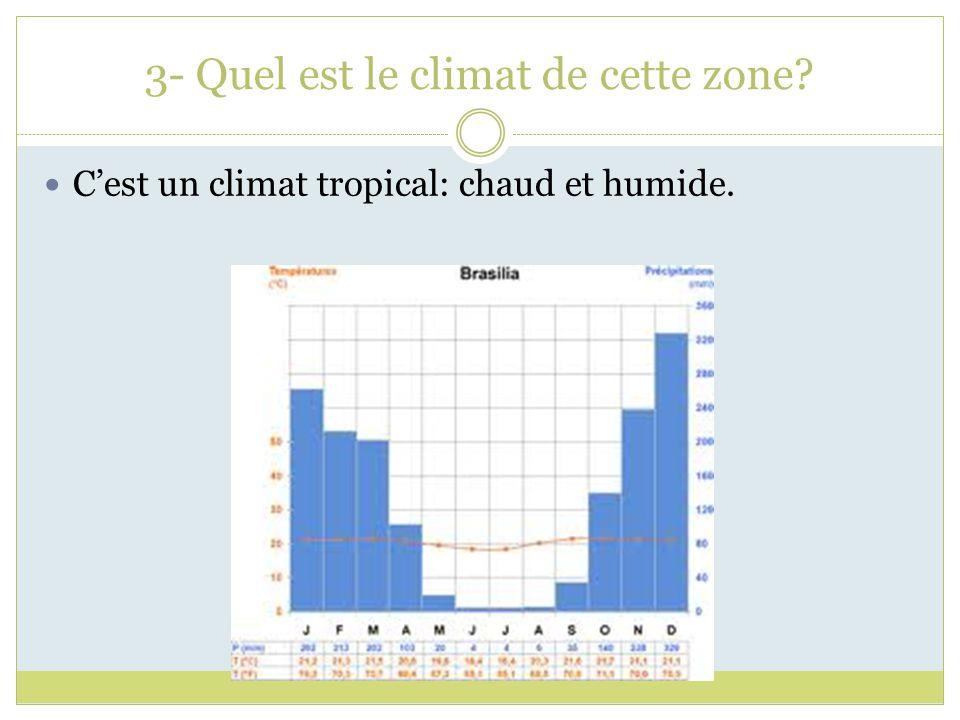 3- Quel est le climat de cette zone? Cest un climat tropical: chaud et humide.
