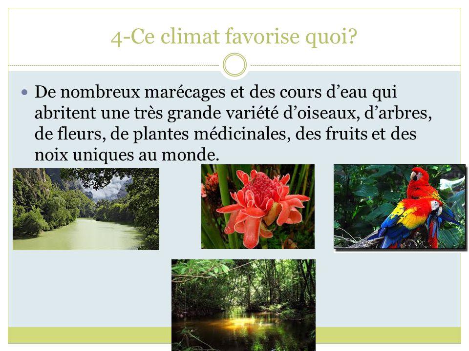 4-Ce climat favorise quoi? De nombreux marécages et des cours deau qui abritent une très grande variété doiseaux, darbres, de fleurs, de plantes médic