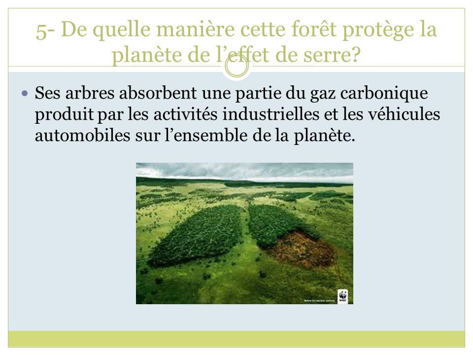 5- De quelle manière cette forêt protège la planète de leffet de serre? Ses arbres absorbent une partie du gaz carbonique produit par les activités in