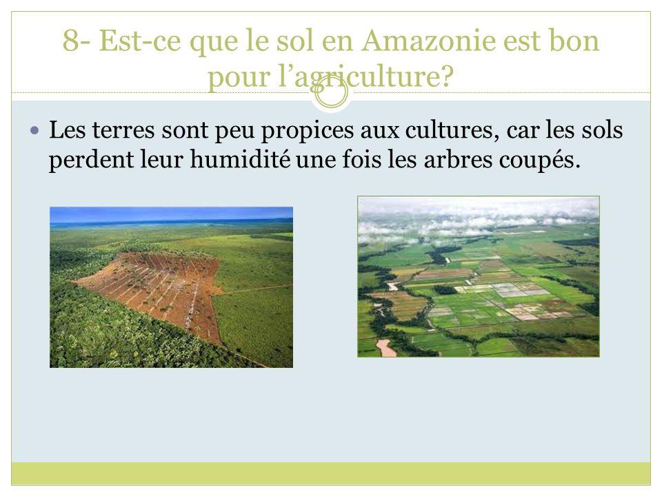 8- Est-ce que le sol en Amazonie est bon pour lagriculture? Les terres sont peu propices aux cultures, car les sols perdent leur humidité une fois les