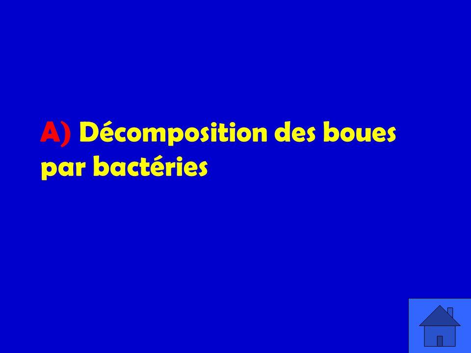 A) Décomposition des boues par bactéries
