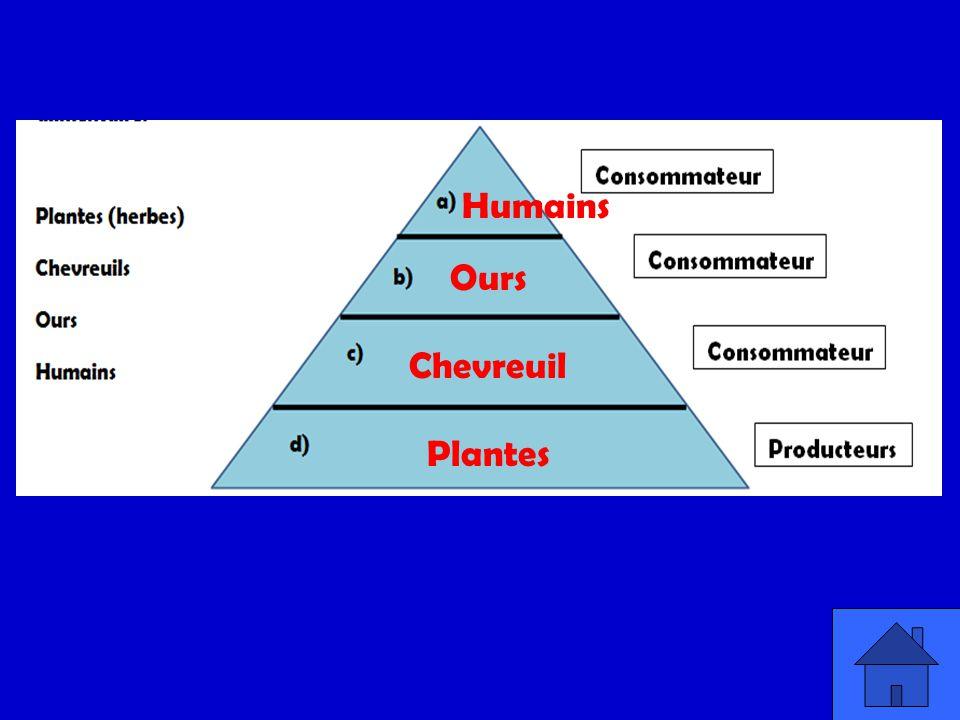 Quest qui correspond au nombre de hectares que ça nous prend pour notre mode de vie : nourriture, logement, etc.