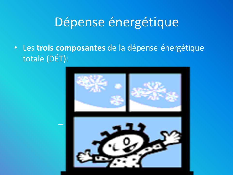 Dépense énergétique Les trois composantes de la dépense énergétique totale (DÉT): – Métabolisme de repos – Activité physique – Effet thermique de lali