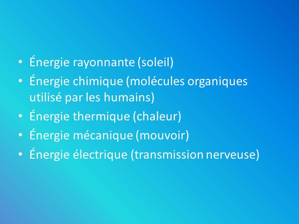 Énergie rayonnante (soleil) Énergie chimique (molécules organiques utilisé par les humains) Énergie thermique (chaleur) Énergie mécanique (mouvoir) Én