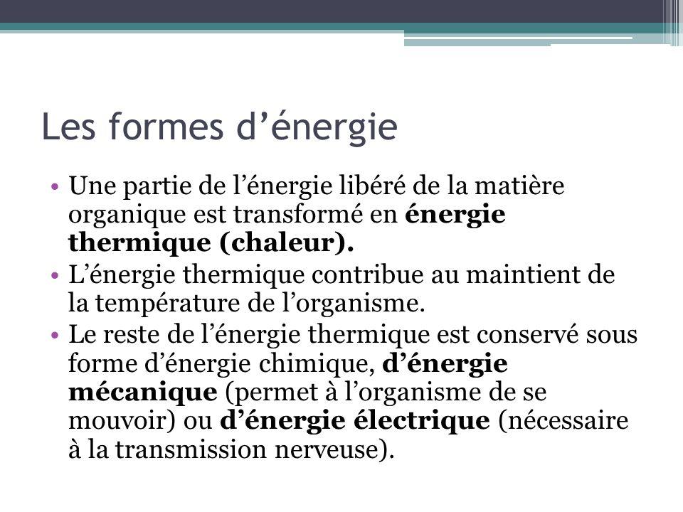 Les formes dénergie Une partie de lénergie libéré de la matière organique est transformé en énergie thermique (chaleur). Lénergie thermique contribue