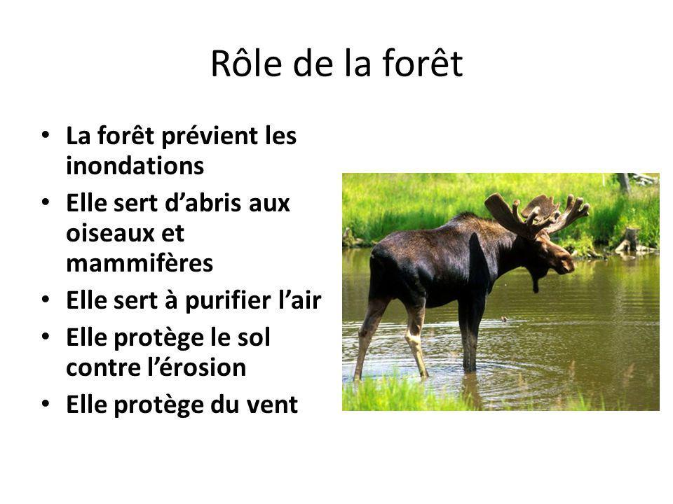 Rôle de la forêt La forêt prévient les inondations Elle sert dabris aux oiseaux et mammifères Elle sert à purifier lair Elle protège le sol contre lér