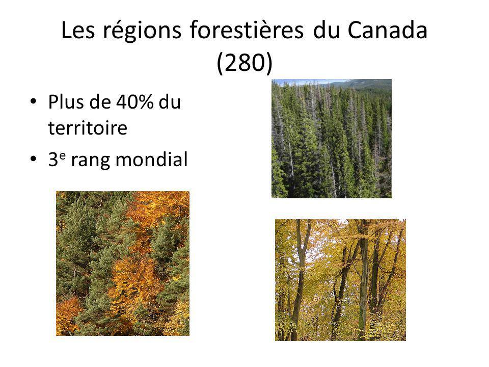 Les régions forestières du Canada (280) Plus de 40% du territoire 3 e rang mondial