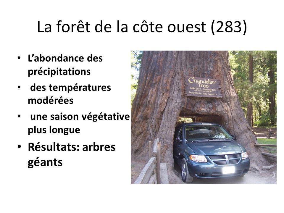 La forêt de la côte ouest (283) Labondance des précipitations des températures modérées une saison végétative plus longue Résultats: arbres géants