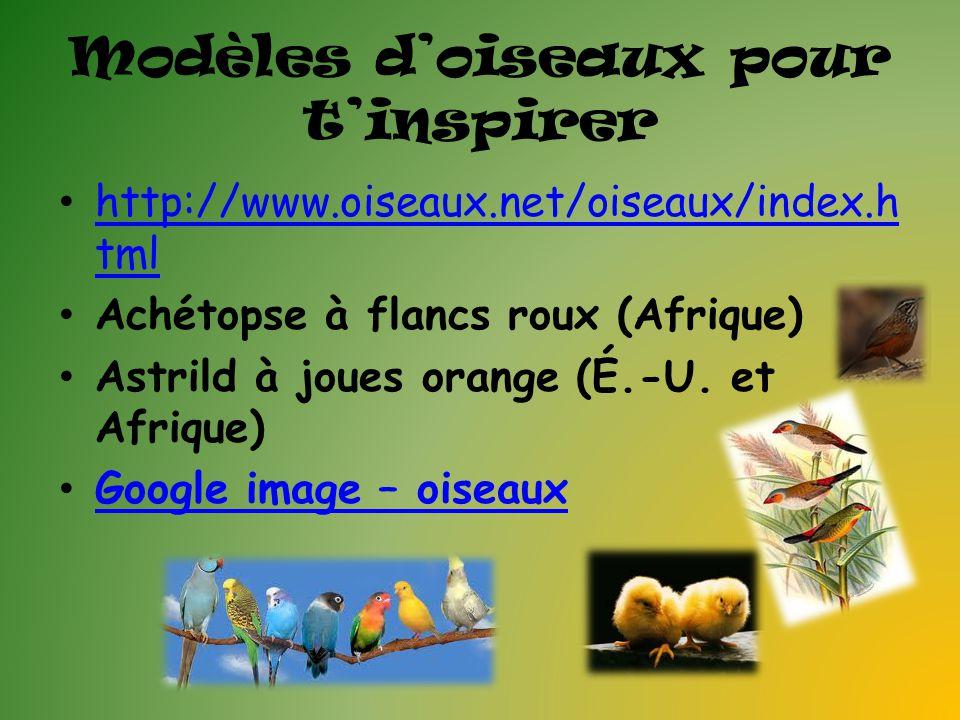 Modèles doiseaux pour tinspirer http://www.oiseaux.net/oiseaux/index.h tml http://www.oiseaux.net/oiseaux/index.h tml Achétopse à flancs roux (Afrique