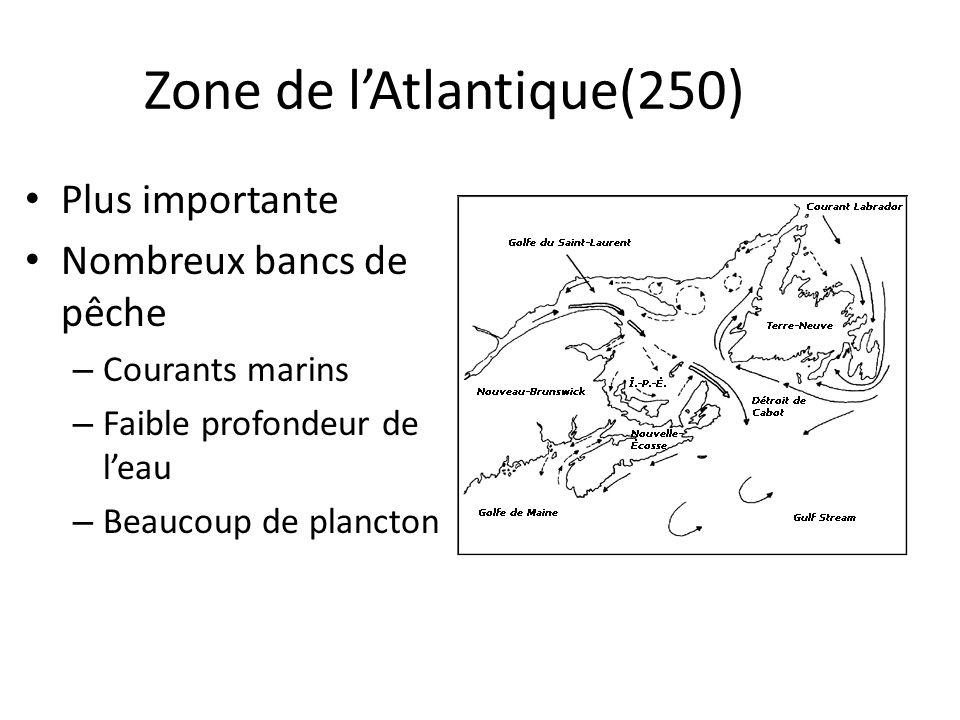 Zone de lAtlantique(250) Plus importante Nombreux bancs de pêche – Courants marins – Faible profondeur de leau – Beaucoup de plancton