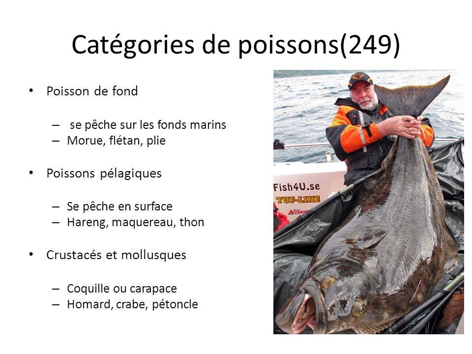 Catégories de poissons(249) Poisson de fond – se pêche sur les fonds marins – Morue, flétan, plie Poissons pélagiques – Se pêche en surface – Hareng,