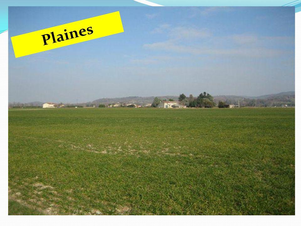 Plaines