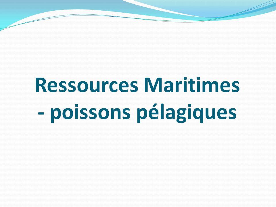 Ressources Maritimes - poissons pélagiques