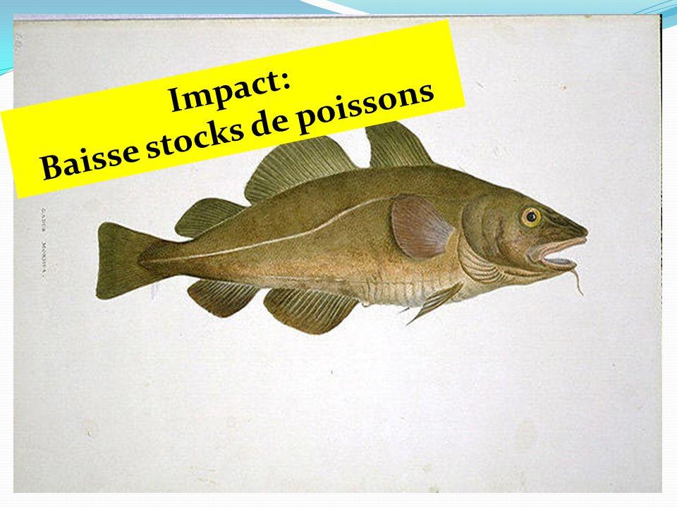 Impact: Baisse stocks de poissons