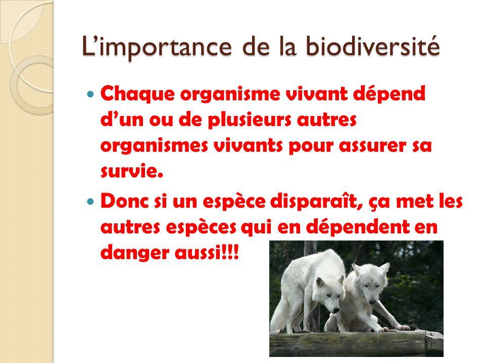 Limportance de la biodiversité Chaque organisme vivant dépend dun ou de plusieurs autres organismes vivants pour assurer sa survie. Donc si un espèce